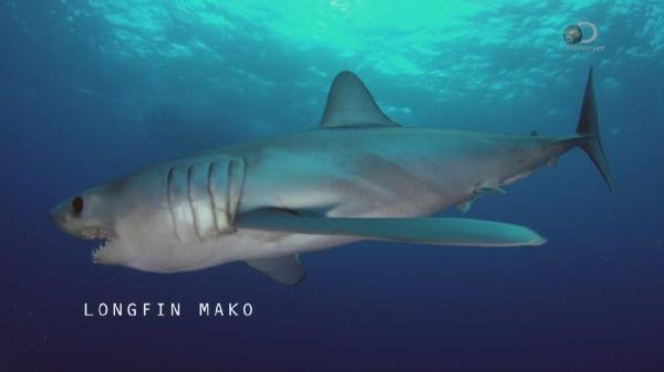 ������ ����. ��������� ����� / SHARK WEEK. CUBAN SHARK (2015)