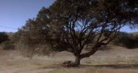 На обочине (2004) BDRip 720p от NNNB | D, P, A