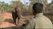 BBC: Мир природы - Горы тропических дождей (2009) HDTVRip от Kaztorrents